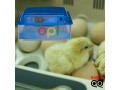 incubateur-des-oeufs-automatise-small-0